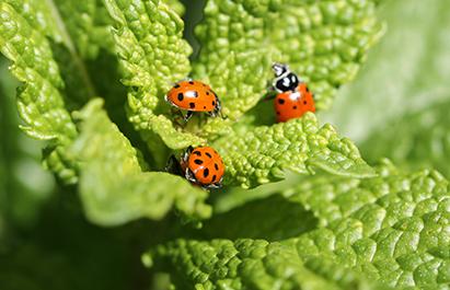 fournisseur de fruits et légumes bio-poder-l ecologie